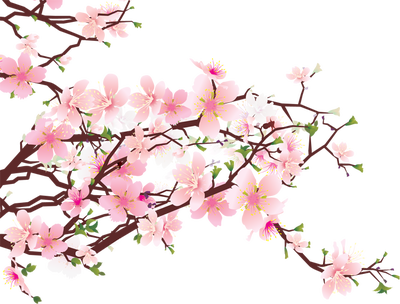 png freeuse library Blossom vector. Sakura flower png hd