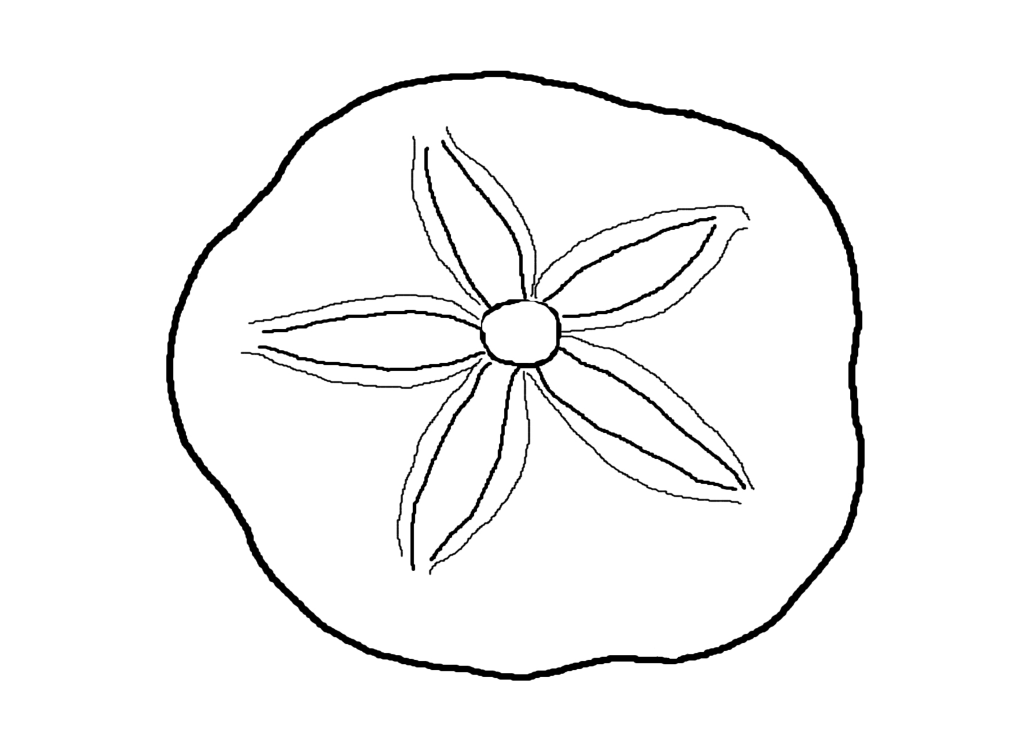 png royalty free Sand dollar coloring pages