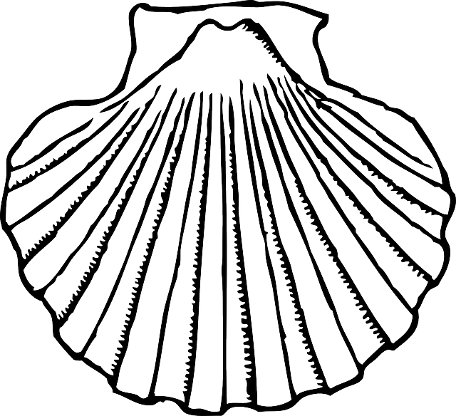 jpg library download  collection of scallop. Clam clipart black and white