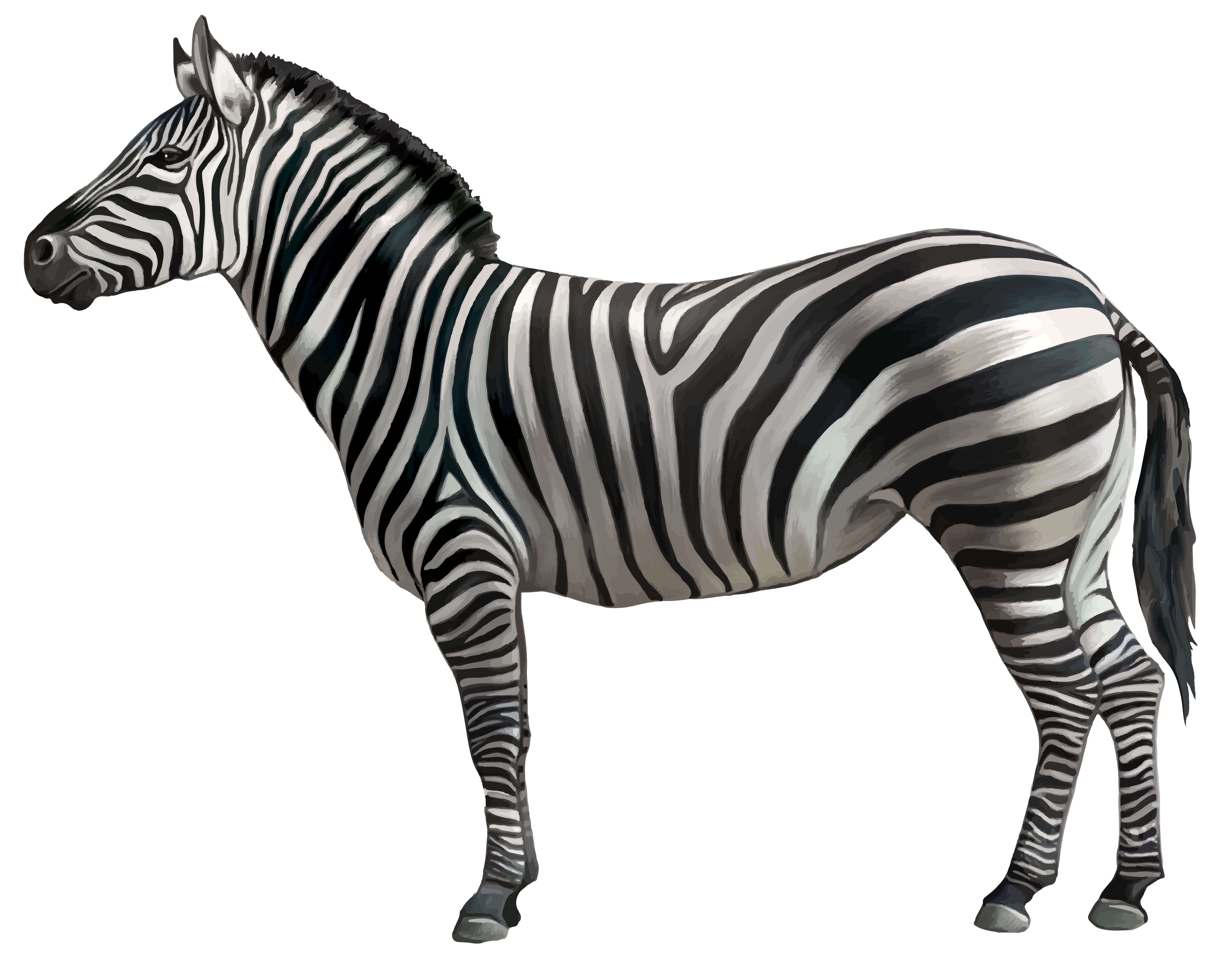 png stock African animal clipart. Zebra png image sonhi