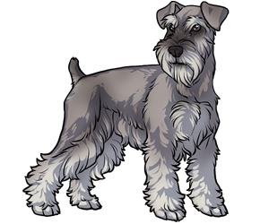 vector royalty free stock Image result for dog drawing schnauzer