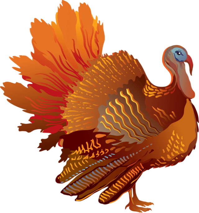 vector black and white transparent turkey colorful #106881851