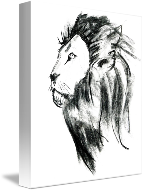 clipart freeuse library Portrait of a by. Drawing charcoal lion
