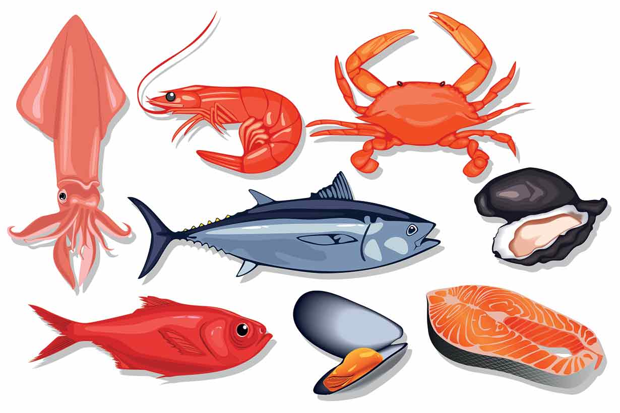 graphic free stock Edible fish x free. Seafood clipart.