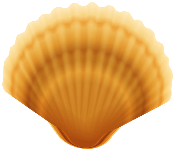 clip art free Shell transparent png image. Seafood clipart clam.