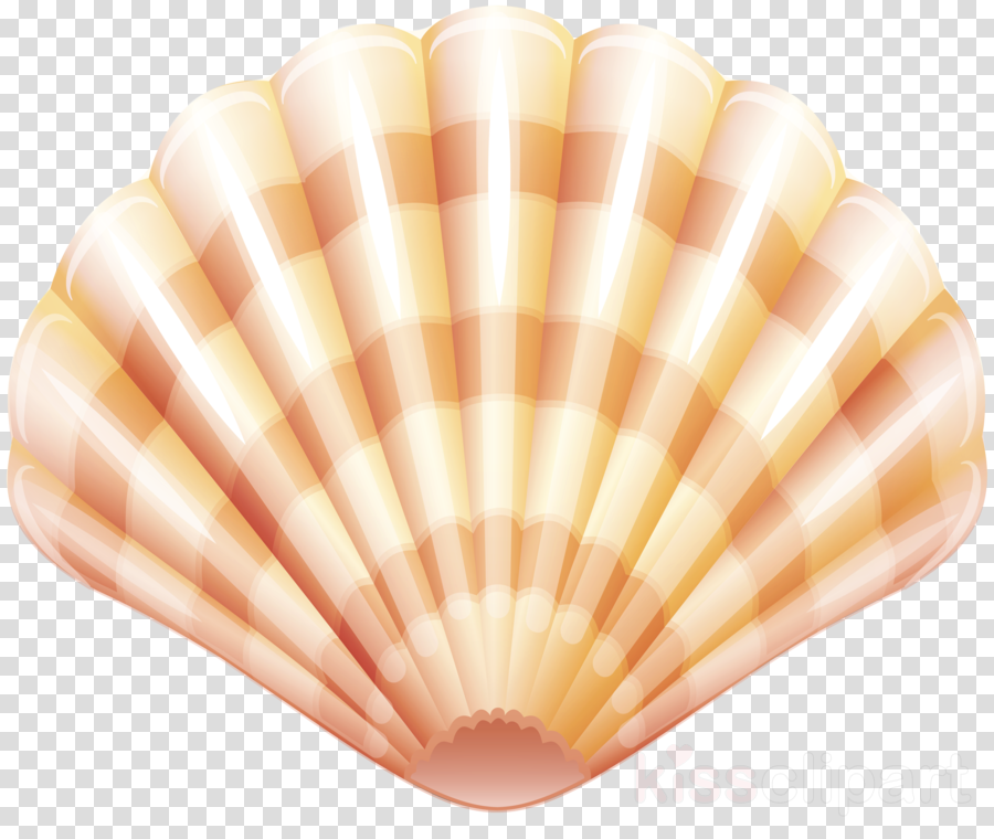 svg Background seashell peach . Seafood clipart clam