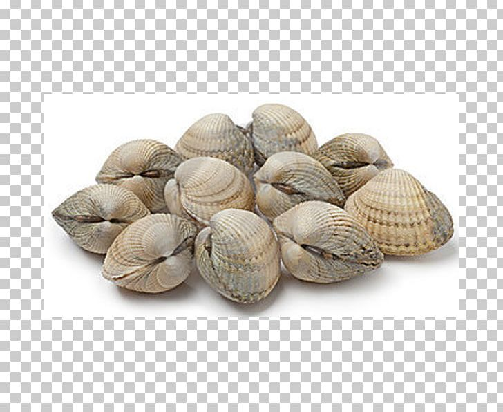 picture freeuse Seafood clipart clam. Cockle shellfish mussel png