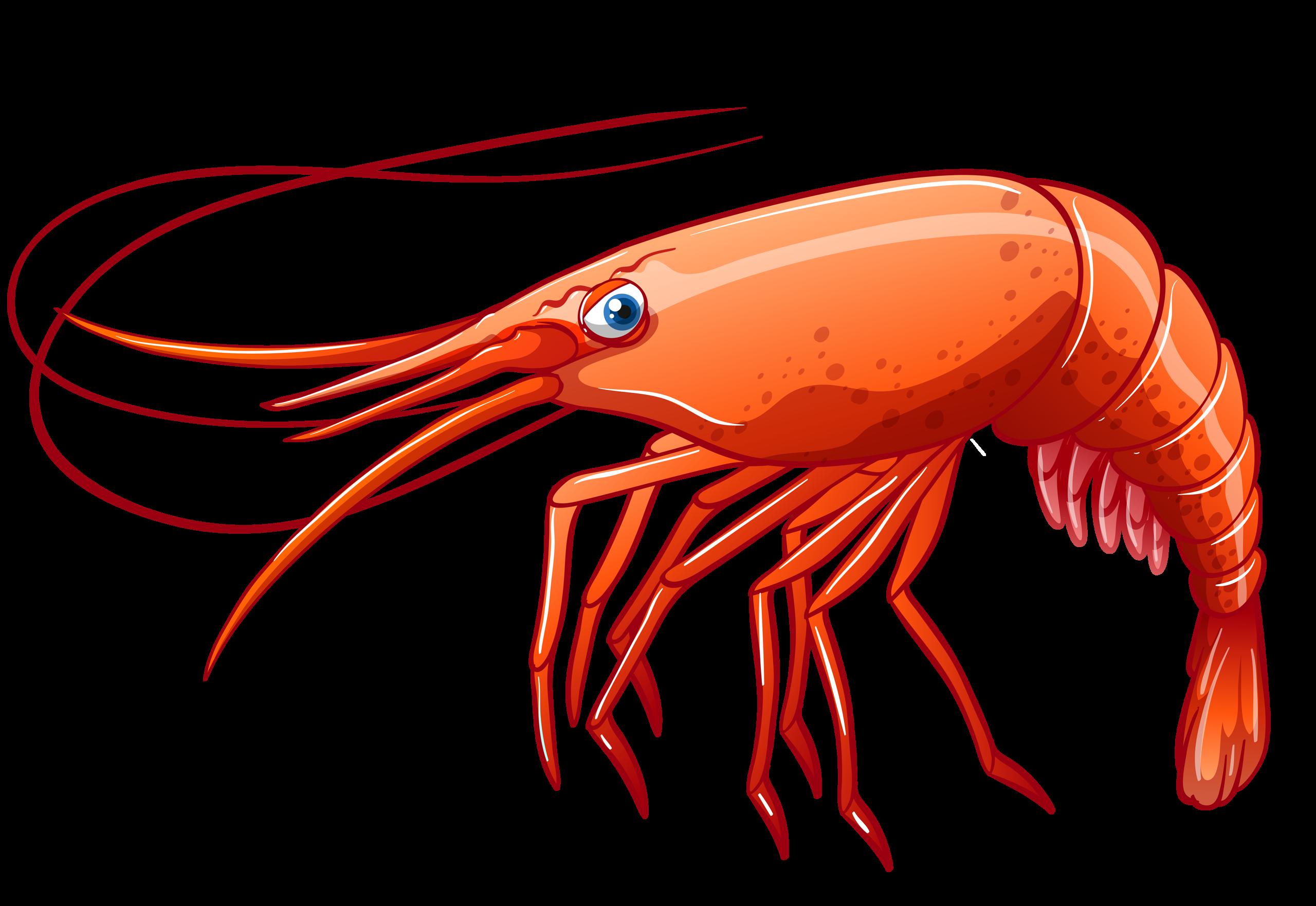 jpg free stock seafood clipart dancing shrimp #82969091