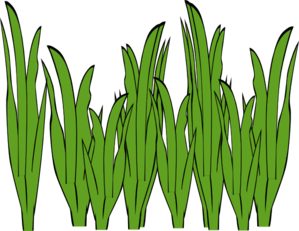 clipart freeuse stock Seagrass Clip Art at Clker