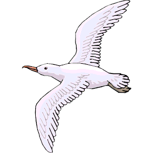 png black and white library Clip art images illustrations. Seagull clipart.