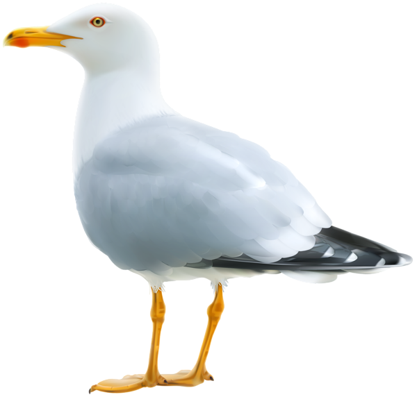 svg freeuse download Png image pinterest images. Seagull clipart.