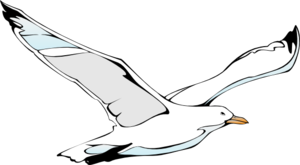 vector library Seagulls drawing. Flying sea gull clip.