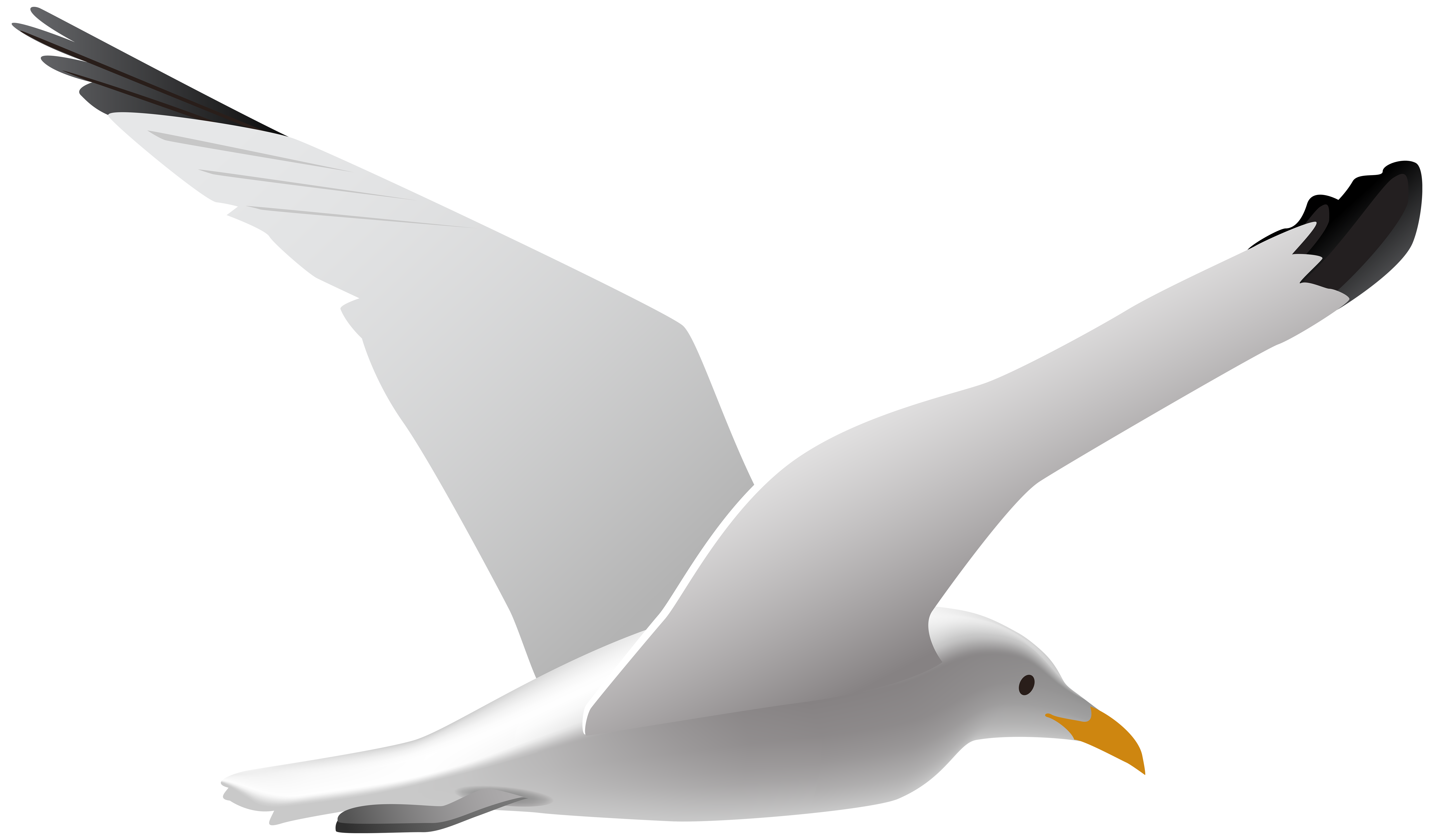 vector royalty free Seagull PNG Clip Art Image