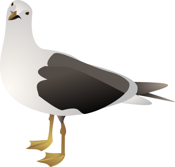 graphic transparent download Gull Clip Art at Clker