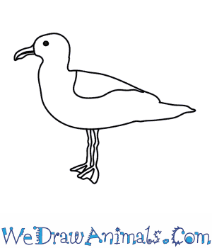picture free How to draw a. Seagulls drawing.