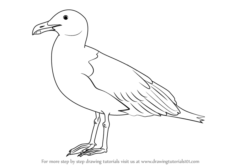 freeuse stock Seagulls drawing. Learn how to draw.