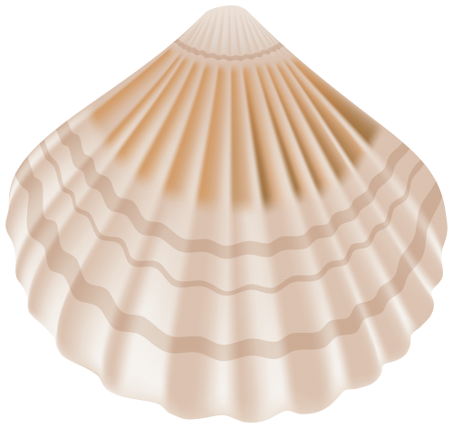 png black and white download Seashell png clip art. Seashells clipart.