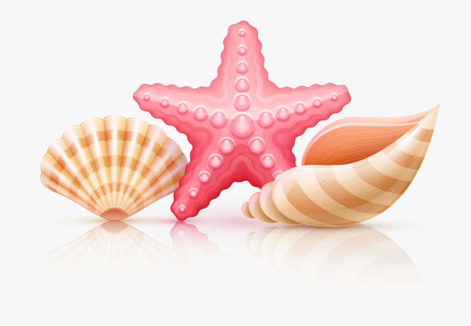 banner free stock Starfish and png transparent. Seashells clipart.