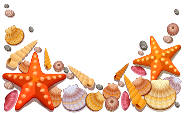 image download Seashells clipart. This png image sea.