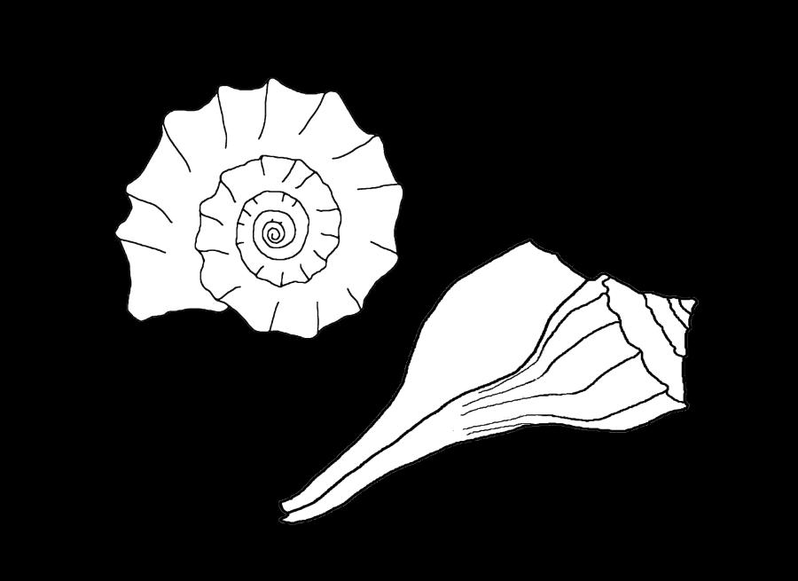 clip art freeuse Sea shells at getdrawings. Drawing nature