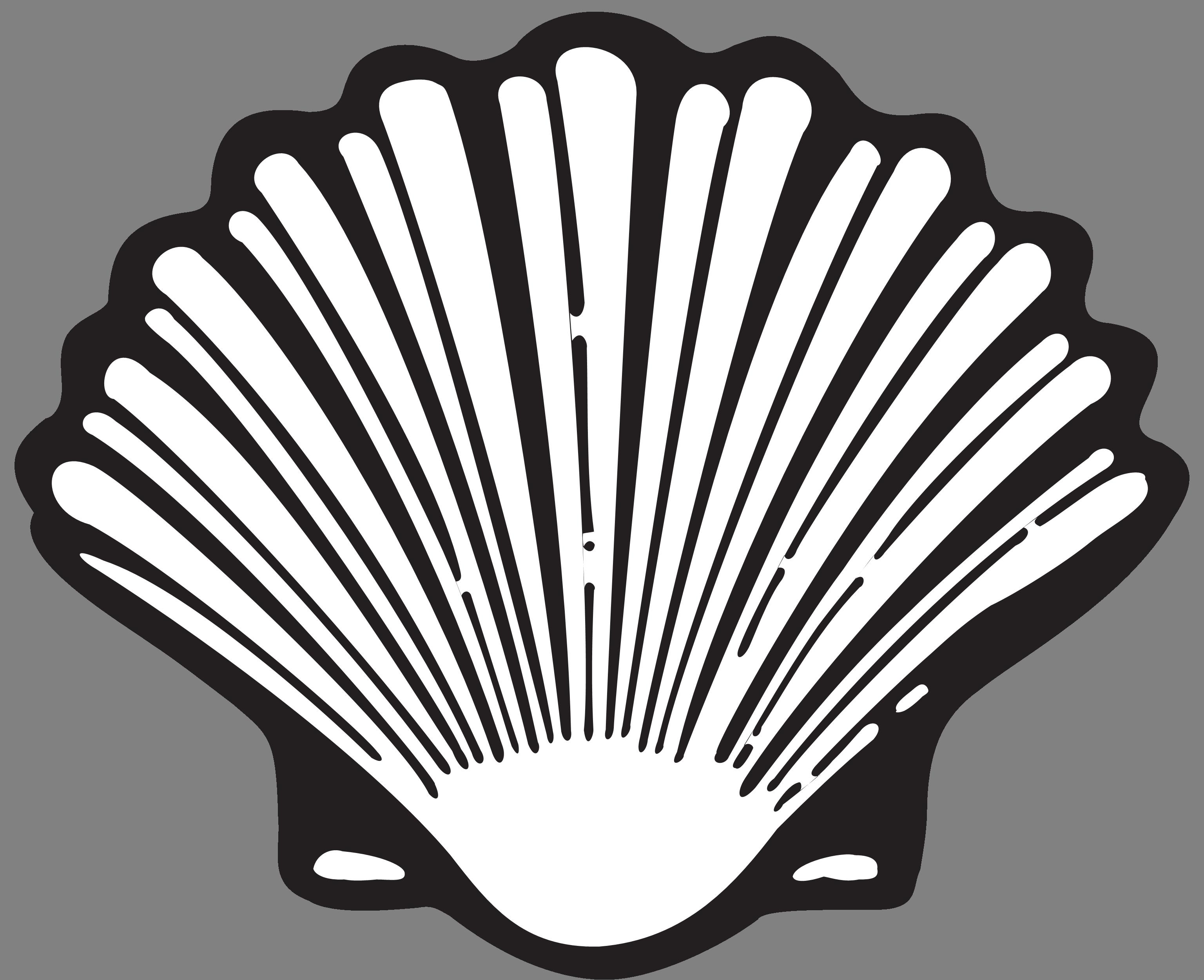 png transparent shape drawing seashell #102896210
