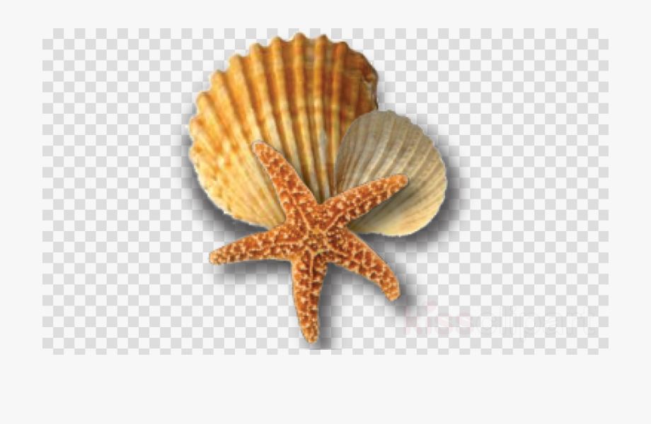 image freeuse Shells shell png and. Beach transparent starfish