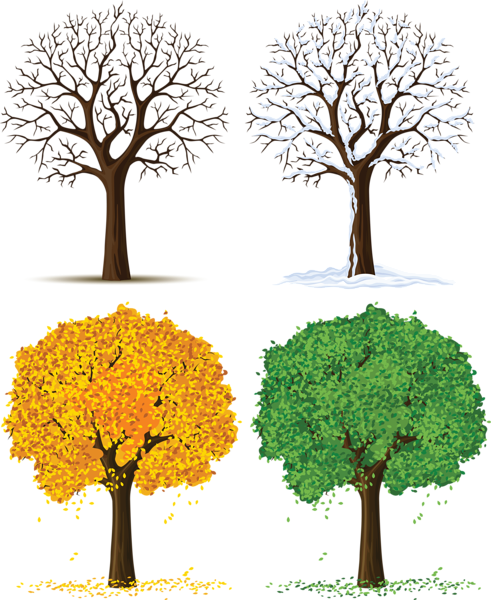 vector royalty free library Seasons clipart. Four trees png pinterest