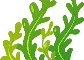graphic freeuse stock Seaweed clipart. Transparent background free on