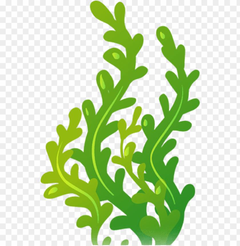 jpg free stock Carlisletheacarlisletheatre org images cli. Seaweed clipart