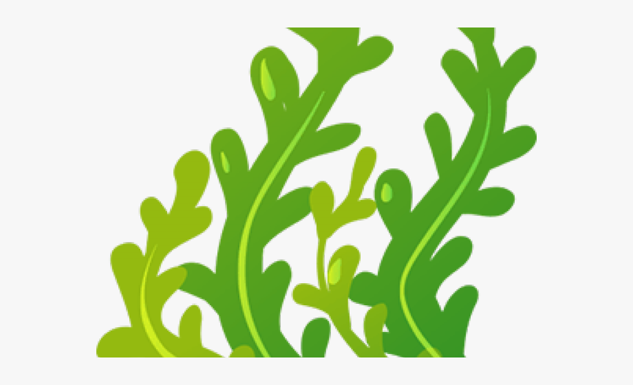 banner library stock Seaweed clipart. Cliparts transparent background cartoon.