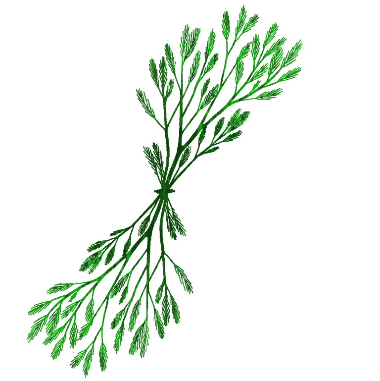 clipart transparent library Seaweed Drawing Clip art