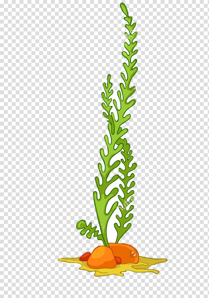 jpg library download Green leafed plant illustration. Seaweed clipart tall