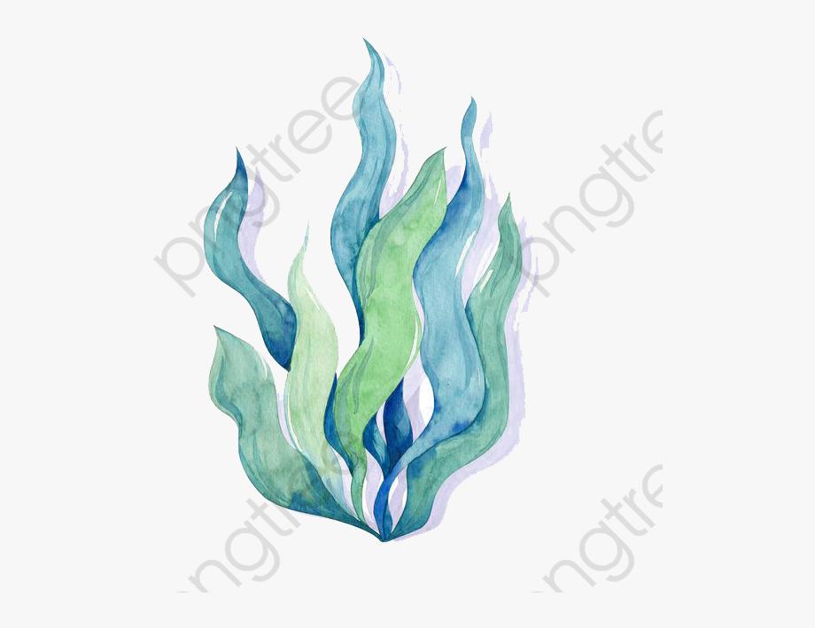 clip art library library Algae dibujos de algas. Seaweed clipart watercolor