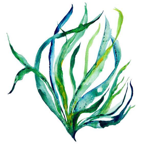 jpg transparent library Sway illustration sea life. Seaweed clipart watercolor