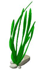 vector royalty free download Png image. Seaweed transparent.