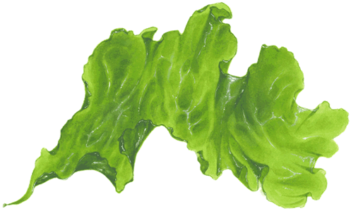 stock Recommendations from the seafood. Seaweed transparent