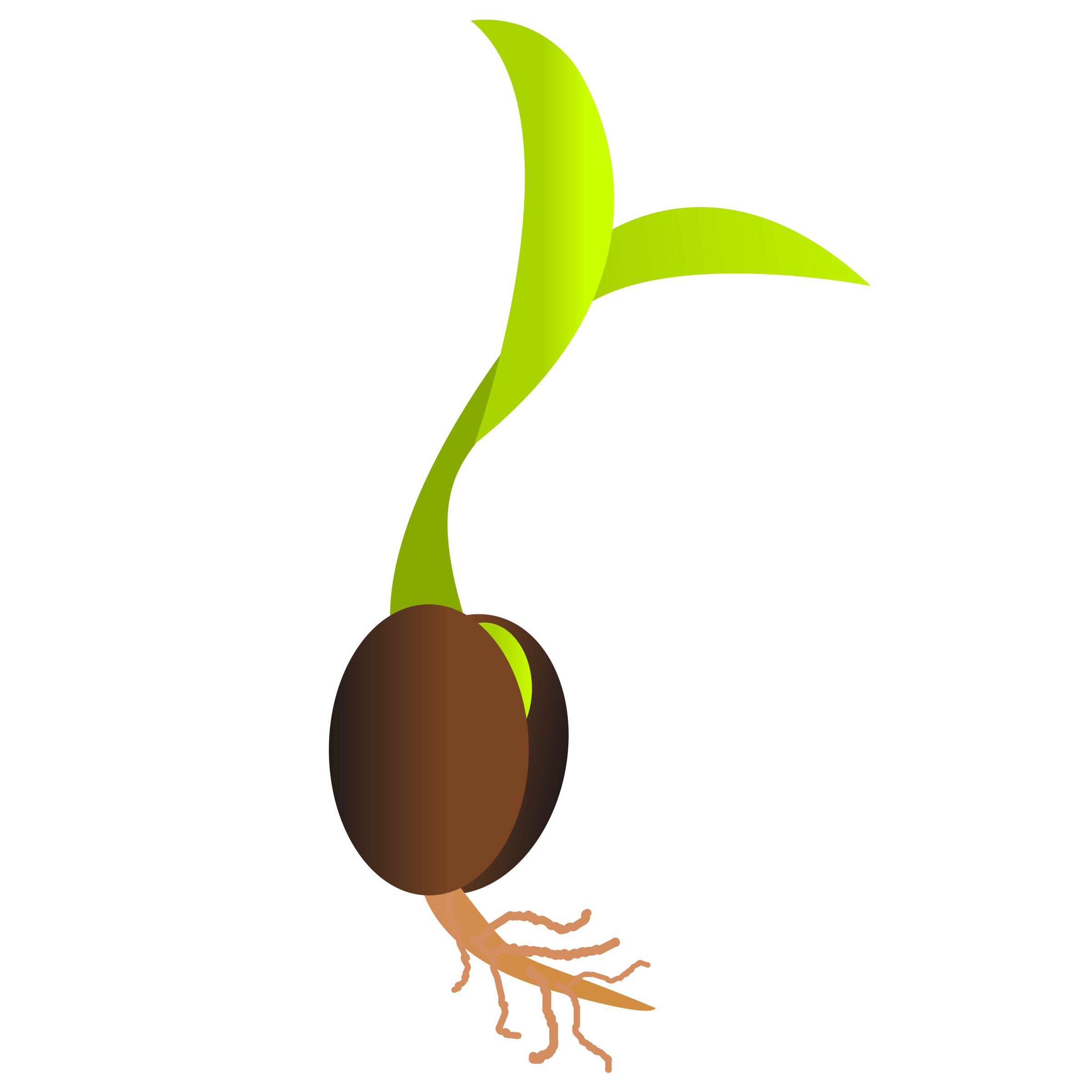 clip art freeuse library Roots clipart plant seed