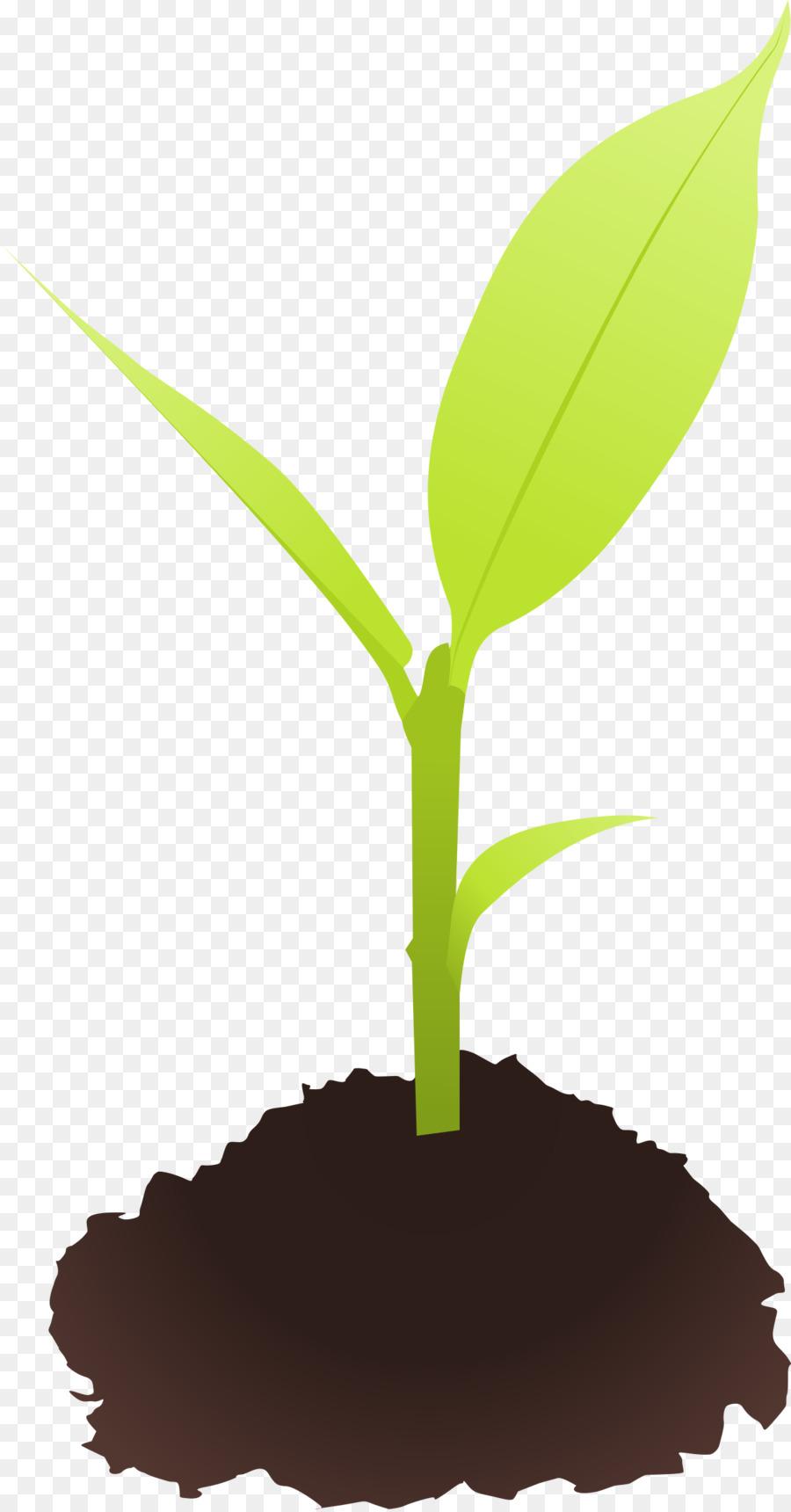 banner transparent stock Seedling clipart. Family tree background illustration.