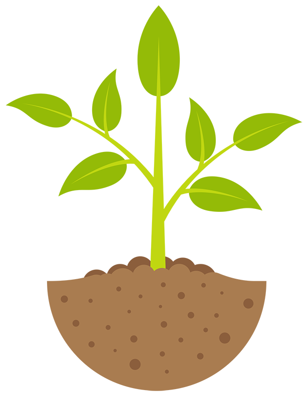image freeuse download Plant stage . Seedling clipart.
