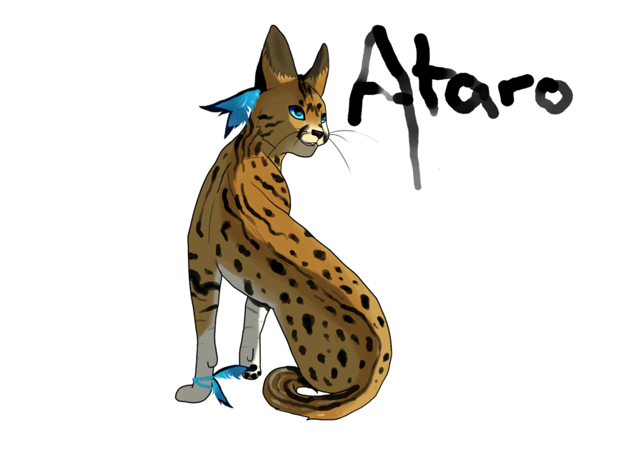 svg freeuse stock Ataro by black tundra. Serval drawing
