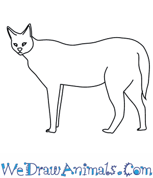 svg transparent library How to draw a. Serval drawing