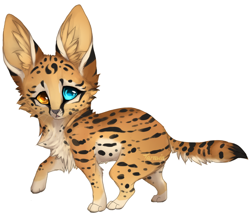 picture transparent Serval drawing. Auction baby adoptable by