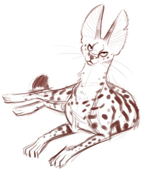 graphic transparent library Cat animal reference art. Serval drawing