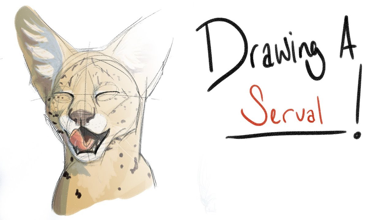 image royalty free download Serval drawing.  a ep servals