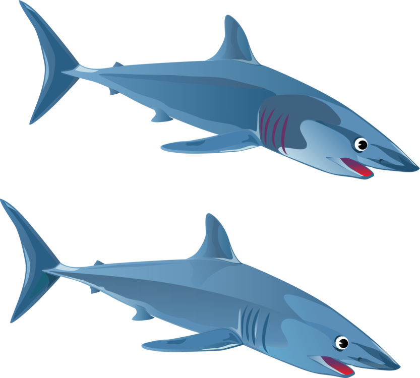 clipart library download Blue shark Cartilaginous fishes Great white shark free commercial