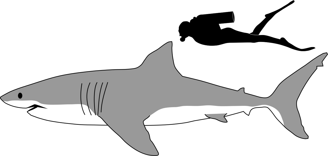 vector freeuse download Great white free on. Shark clipart.