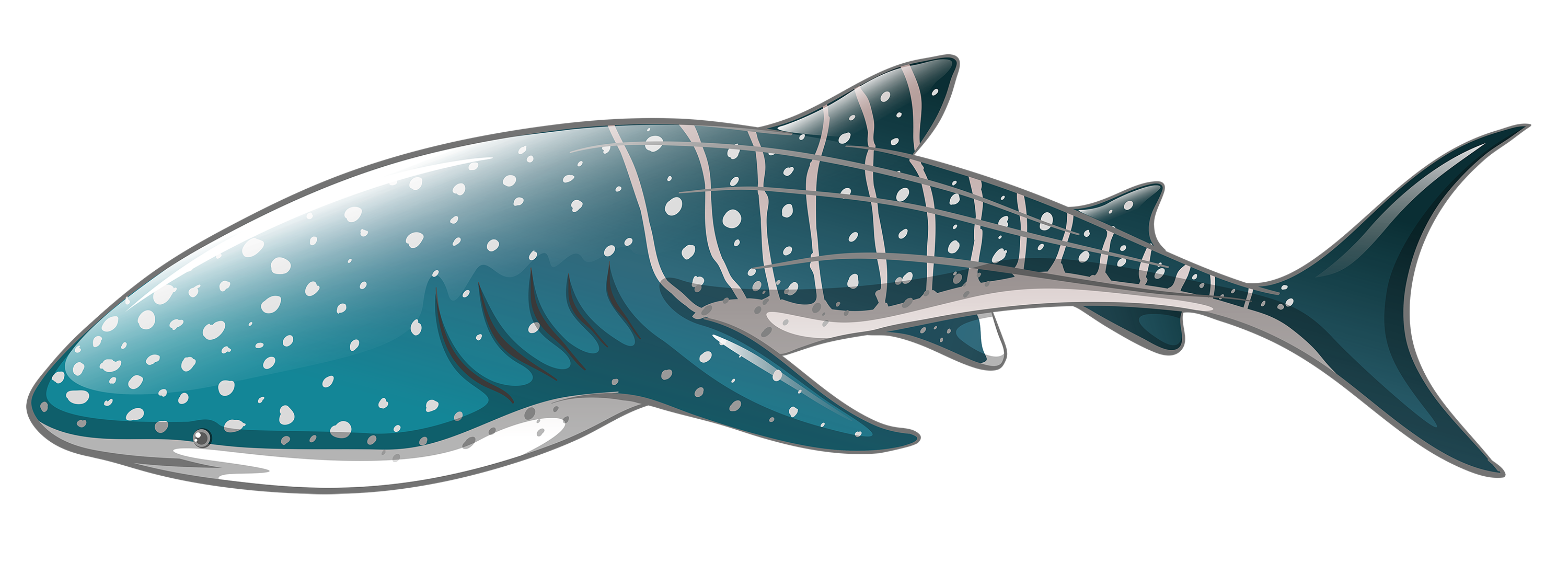 banner transparent library Clipart whale. Shark png best web