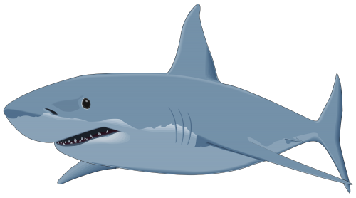 graphic free download Shark png image pinterest. Stingray clipart free.