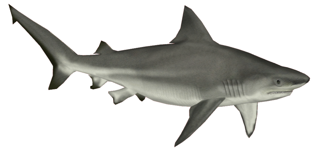 png library download Png sea animals clip. Sharks clipart bull shark