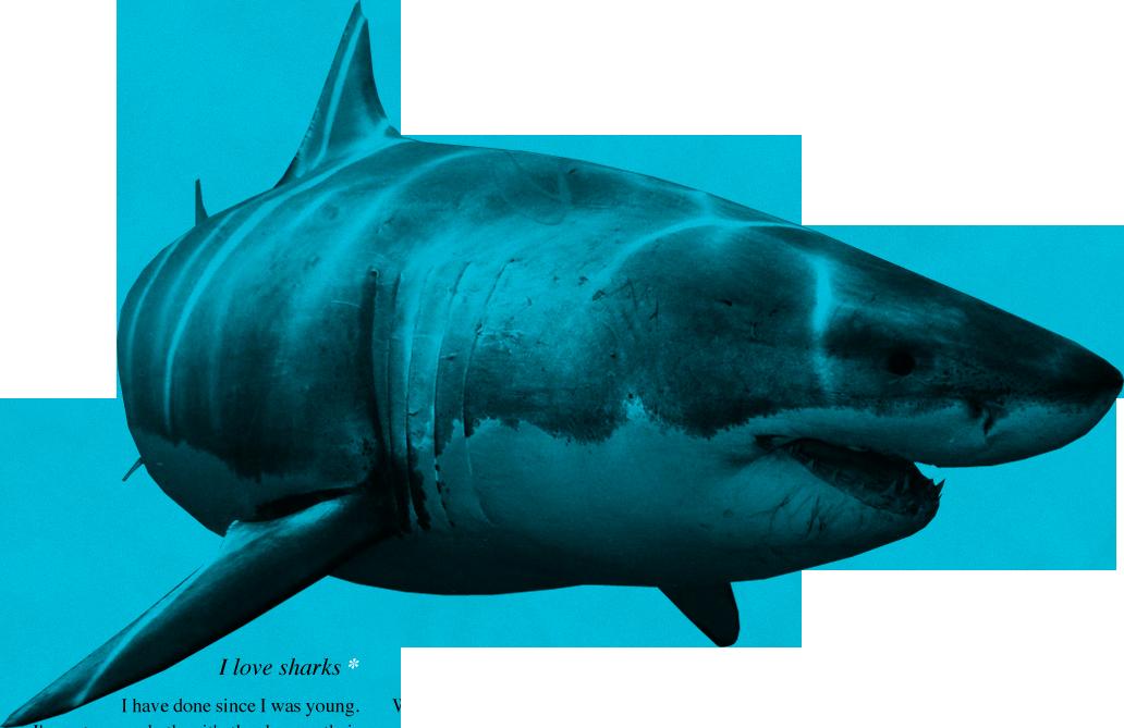 png freeuse Sharks clipart bull shark. Png